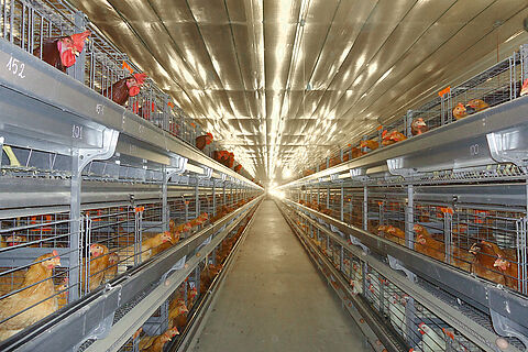 UNIVENT Parents-AI broiler breeder housing system for artificial insemination (AI)