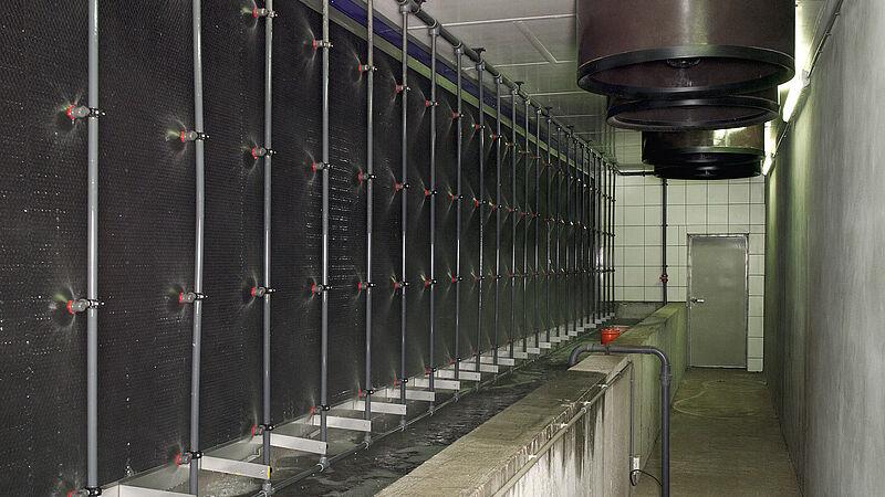 Oczyszczanie zużytego powietrza w hodowli trzody za pomocą systemu MagixX