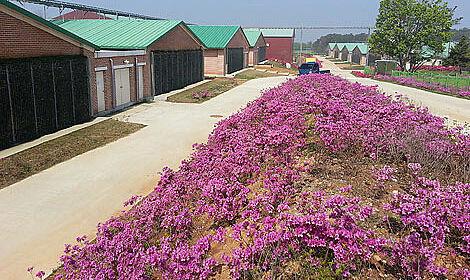 Top hodowla loch w Nonsan-si, Korea Południowa