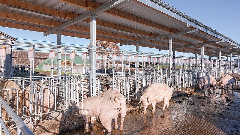 Nowoczesna hodowla loch
