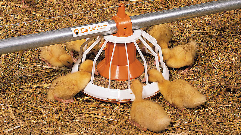 Produkcja mięsa: karmidło Big Pan Plus do odchowu kaczek