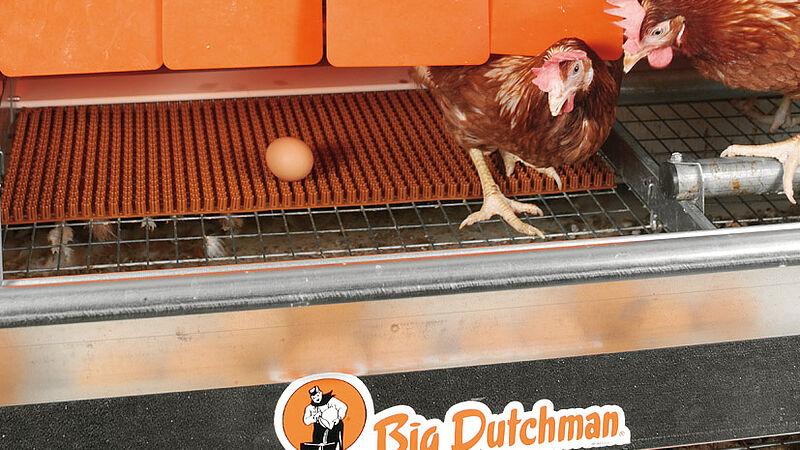 Colony-EU: produkcja jaj na najwyższym poziomie w instalacjach do chowu w małych grupach