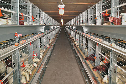 Eurovent-Parents breeder poultry cage