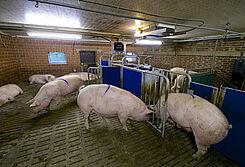 Call-Inn: nowe żywienie wywoływane jest doskonale dopasowane do mniejszych stad lub stad dużych ze stałymi grupami