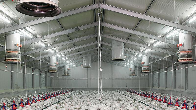 Nowoczesne wyposażenie kurnika: komin dolotowy Fumus dla zdrowego klimatu w kurniku
