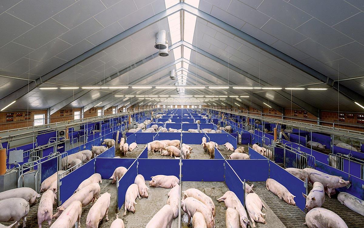 [Obrazek: Sauenhaltung-sow-management-Boerde-Porc-...man_72.jpg]